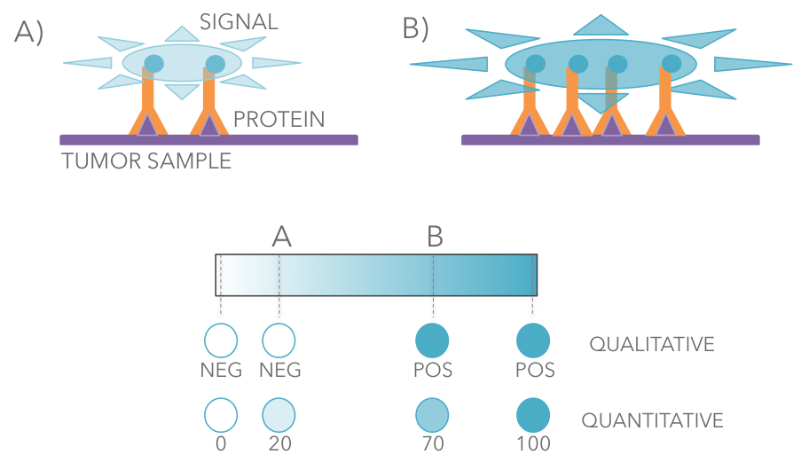 protein-expression-6